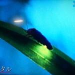 新・3大動物カメラマン・小原玲が感動した蛍スポットが美し過ぎるwww【画像】
