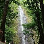 アナザースカイに出たハワイのパワースポット『マノアの滝』が綺麗すぎw行き方や場所・地図は?